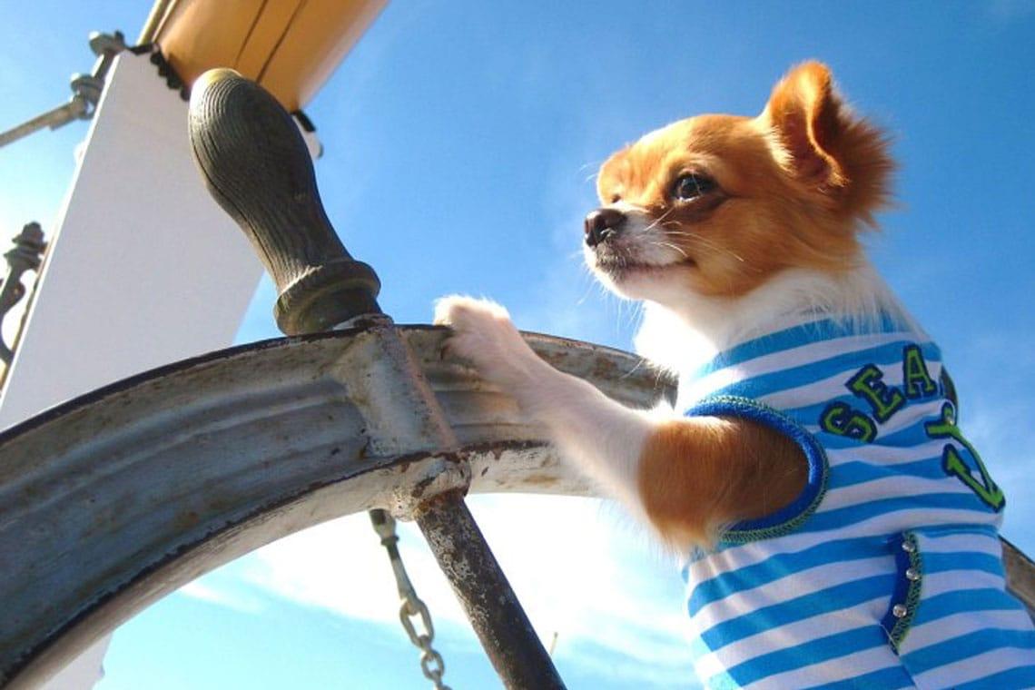 Köpeğinizle ilk tekne tatili